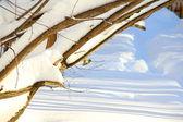 Mezen op besneeuwde tak — Stockfoto
