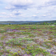 Stock Photo: Tundra Landscape
