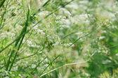 White flowers background — Stock Photo