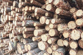 Freshly cut tree logs — Stock Photo