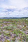 Krajobraz tundry — Zdjęcie stockowe