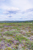 Tundra Landscape — Stock Photo