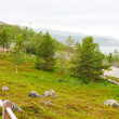 Norwegian park — Stock Photo