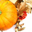 Pumpkin — Stock Photo #31570275