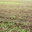 Green seedlings growing out of soil — Stock Photo #31570385