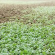 Green seedlings growing out of soil — Stock Photo #31570429