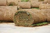 Turf grass rolls — Stock Photo