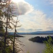 View on fjord from forest — Stock Photo
