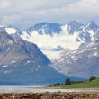 Stock Photo: Arctic mountains and fjord