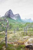 Norwegian tundra and mountains — Stock Photo