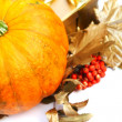 Pumpkin — Stock Photo #32113491