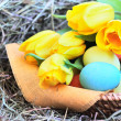 Foto Stock: Basket of easter eggs and tulips on hay