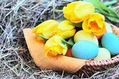Pacifikpaskalya yumurtaları ve laleler saman üzerinde sepet — Stok fotoğraf
