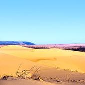 Písečná poušť — Stock fotografie