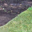Stock Photo: Green sod grass and brown earth