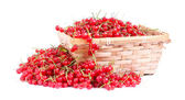 Harvested red currant — Stock Photo