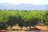 Beautiful spanish landscape — Stock Photo