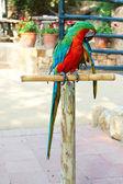 Macaw portrait — Stock Photo