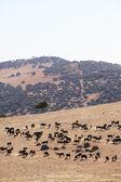 Ferme de taureaux en espagne — Photo
