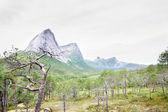 Noorse toendra en bergen — Stockfoto
