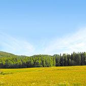 Paisagem com campo e montanhas — Foto Stock