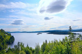 View on fjord from forest — ストック写真