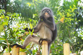 Monkey eating leaves — Stock fotografie