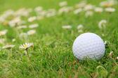 Balle de golf sur le parcours — Photo