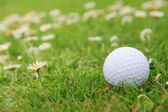 Golf ball on course — Foto de Stock