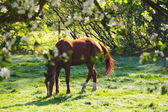 Horse on field — Stock Photo