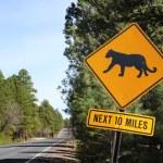 Puma road sign — Stock Photo