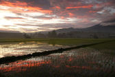Paddy field during sunrise — Stock Photo