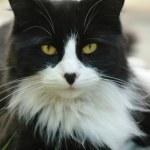 krásná kočka při pohledu na fotoaparát — Stock fotografie