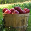 Apples — Stock Photo #13814803