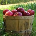 Apples — Stock Photo #13814803
