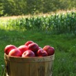 Постер, плакат: Apples