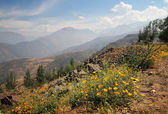 Andes mountains with flowers — Stock Photo