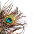 Peacock feathers — Foto de Stock