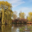 Weeping willow — Stock Photo #24994333