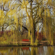 Weeping willow — Stock Photo #24994527
