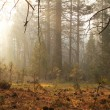 Misty forest — Stock Photo #28831593