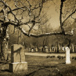 Cemetery — Stock Photo #29613915