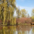 Weeping willow — Stock Photo #30990185