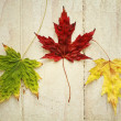 Maple leave — Stock Photo