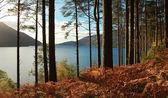 Loch lomond — Foto Stock