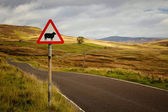 Sheep roadsign — Stock Photo