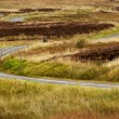 Road in Scotland — Stock Photo