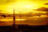 Crane at sunrise — Stock Photo