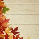 Maple leave — Stock Photo