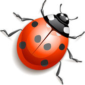 Ladybird — Vector de stock